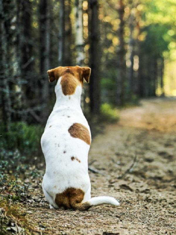 Andalucía destaca la importancia de garantizar el bienestar y la protección de los animales de compañía