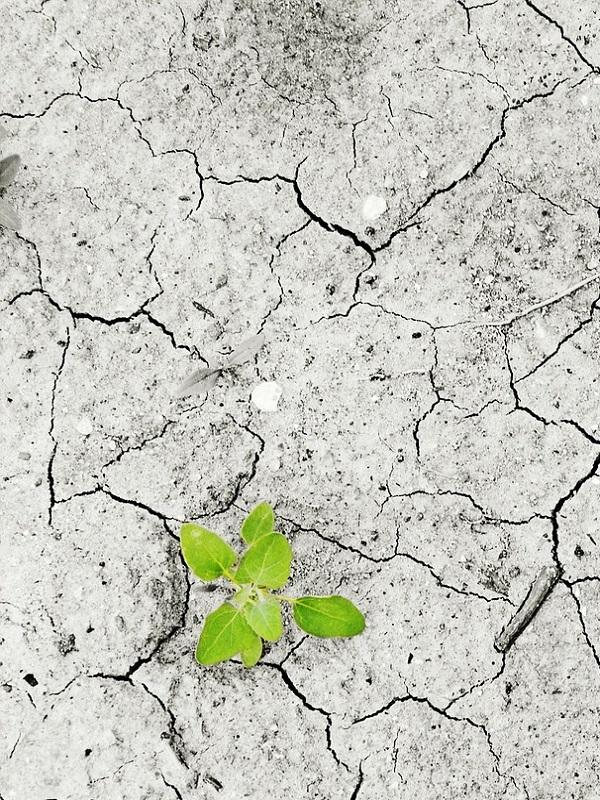 Las redes sociales y el cambio climático