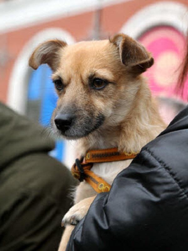 Más de 51.000 animales inscritos en el registro censal de mascotas de la Comunidad de Madrid en lo que va de año