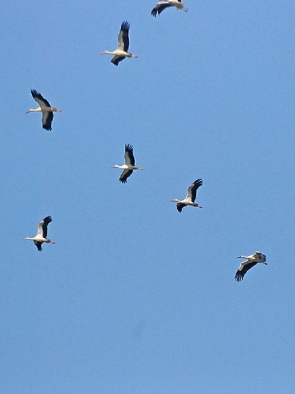 III Congreso Inbternacional de Migración de Aves y Cambio Global, en Tarifa