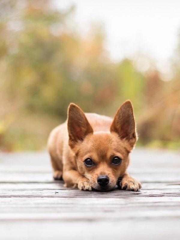 Preguntan por la investigación del envenenamiento de perros en la provincia de Alicante