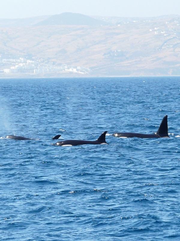 El Gobierno destina 25,4 millones a proteger el medio marino