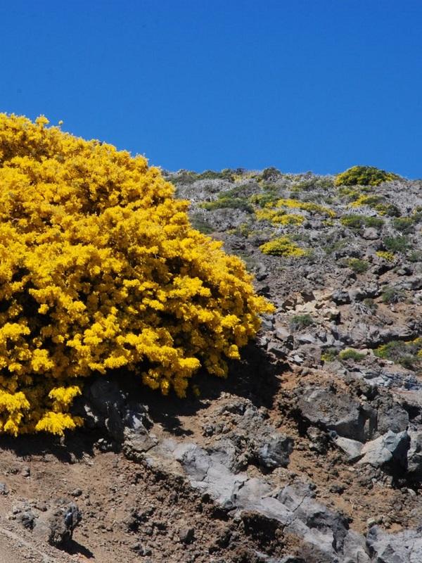 Canarias analizará el impacto del cambio climático en la flora de Tenerife y Gran Canaria