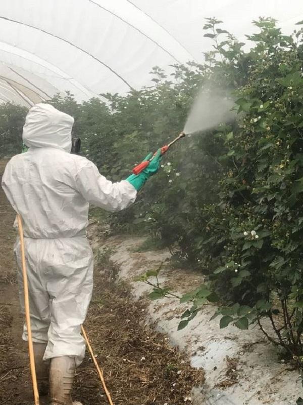 Fungicida de extracto de gobernadora rápido y eficaz