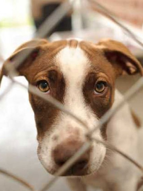 Ciudadanos pide explicaciones al Gobierno por paralizar la ley de bienestar animal