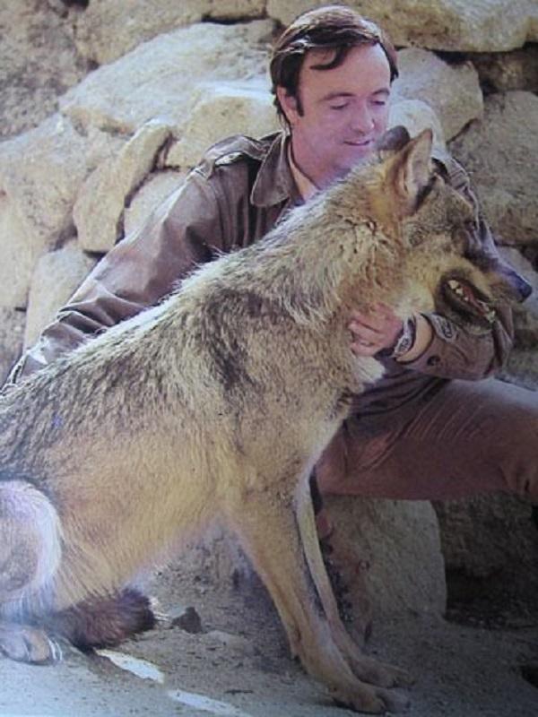 Un encuentro con un lobo marcó la trayectoria como naturalista de Félix Rodríguez de la Fuente