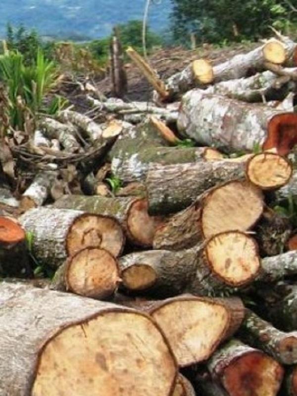 España participa en la conferencia mundial sobre delincuencia forestal