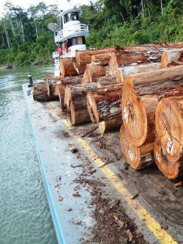 La ciencia respalda nuestras denuncias sobre fraude en la tala de maderas preciosas en la Amazonia