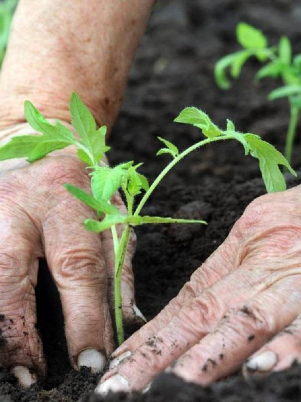 Promover una agricultura sostenible y resiliente
