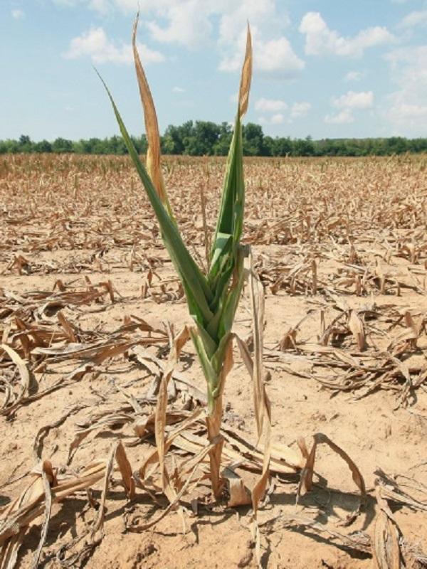 Aumenta el hambre en el mundo debido, entre otros factores, al cambio climático