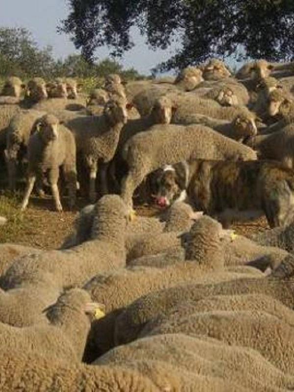 Desmantelado un matadero ilegal en un caserío de Larraul que vendía la carne para consumo humano