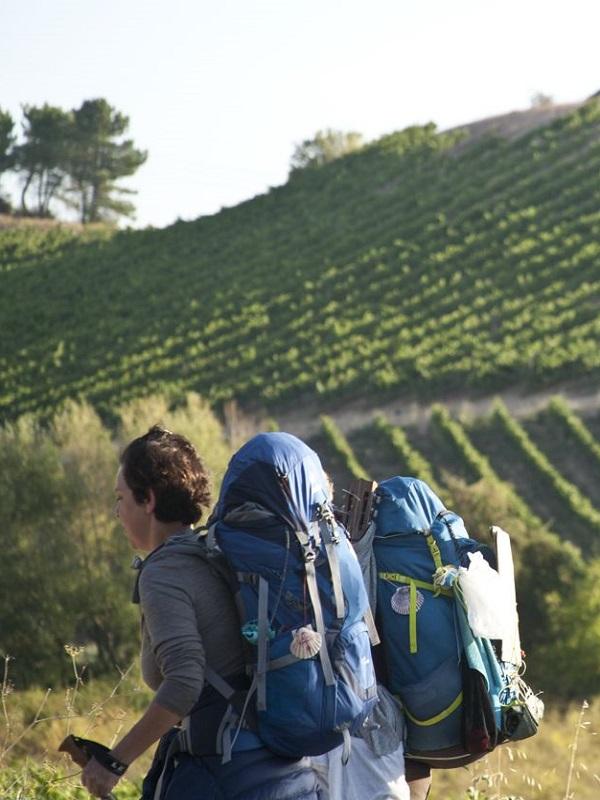 La OMT considera el enoturismo una herramienta para el desarrollo del turismo rural