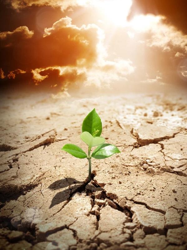 La UIB es aceptada de manera provisional como miembro observador de la Convención Marco de la ONU sobre Cambio Climático