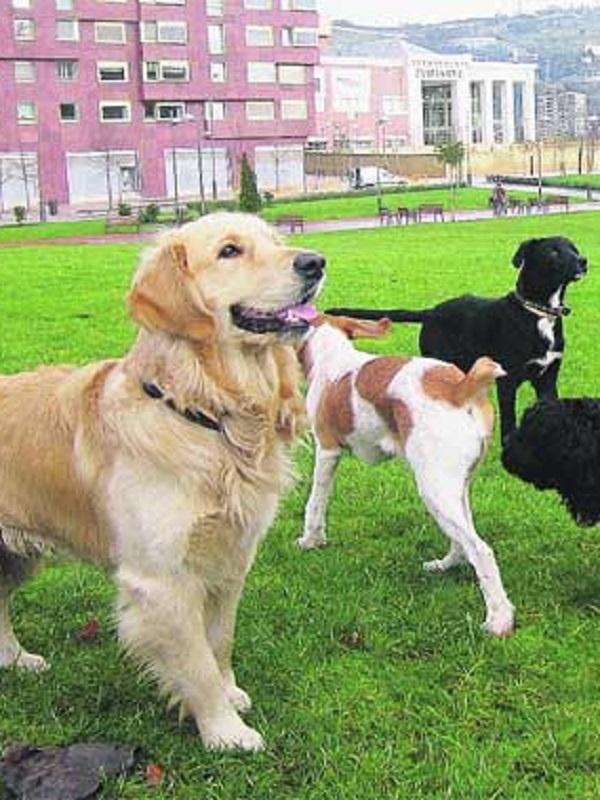 El Gobierno sensibiliza a los cántabros sobre la tenencia responsable de mascotas