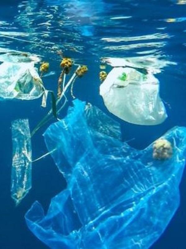 La ciudad mexicana de Tijuana prohíbe las bolsas plásticas desechables