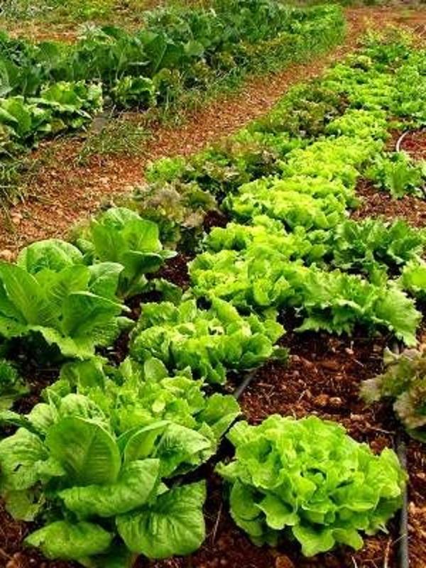 Riojafórum acoge el Congreso bienal de Agricultura Ecológica SEAE