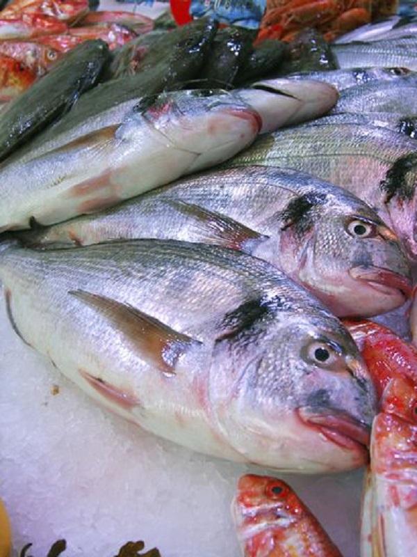 Disruptores endocrinos en el pescado