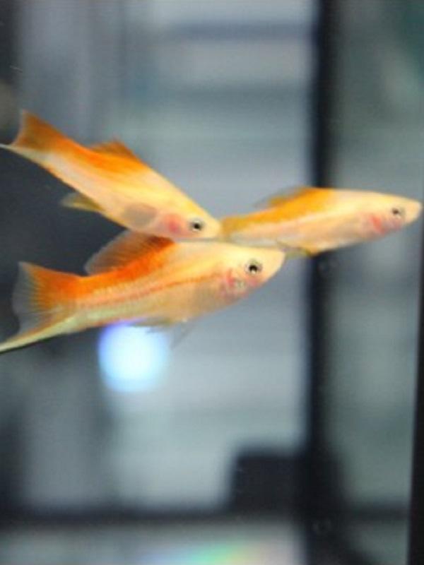 Los metales usados en objetos de consumo es letal para los peces