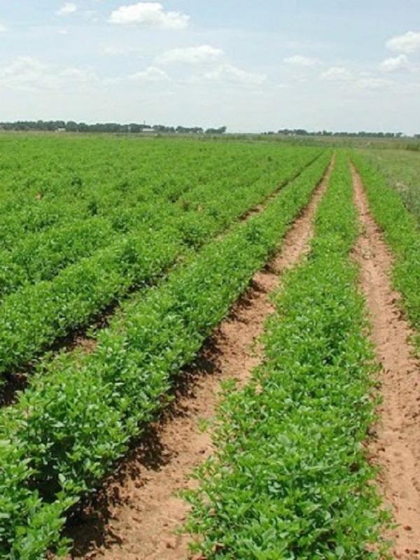 La agricultura de alto rendimiento congenia mejor con el medio ambiente