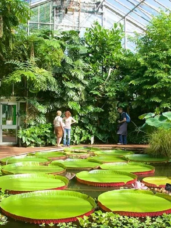 El Real Jardín Botánico te invita a explorar el mundo de las plantas