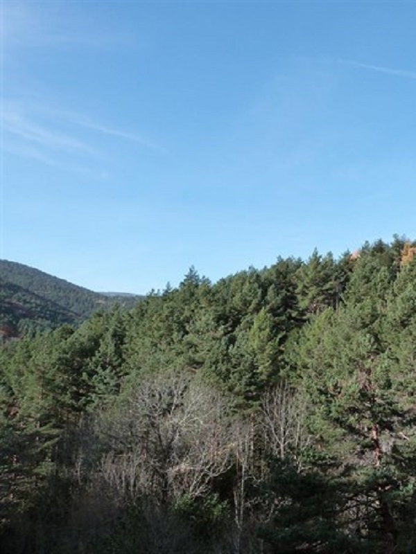 El Parque Sierra de Cebollera oferta el sábado un paseo familiar sobre historias y leyendas del bosque