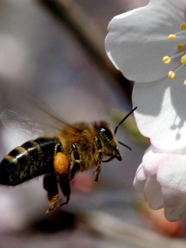 Los insectos introducen contaminación plástica en la cadena alimentaria