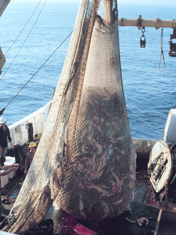 Más de 150 científicos internacionales reclaman que se detenga la grave crisis de sobrepesca del Mediterráneo