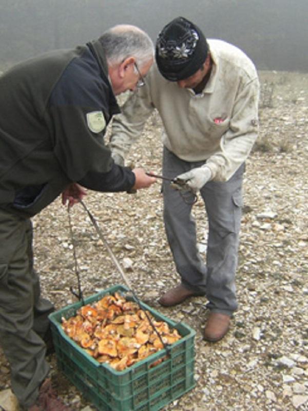 Almería autoriza la recolección de hasta cinco kilos de setas por persona y día para autoconsumo