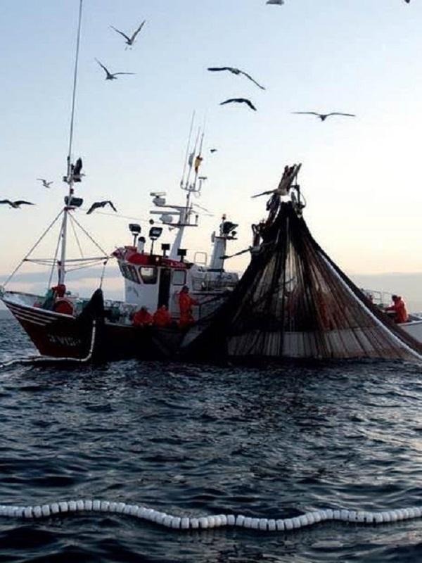 Más de 150 científicos exigen el fin de la sobrepesca en el Mediterráneo