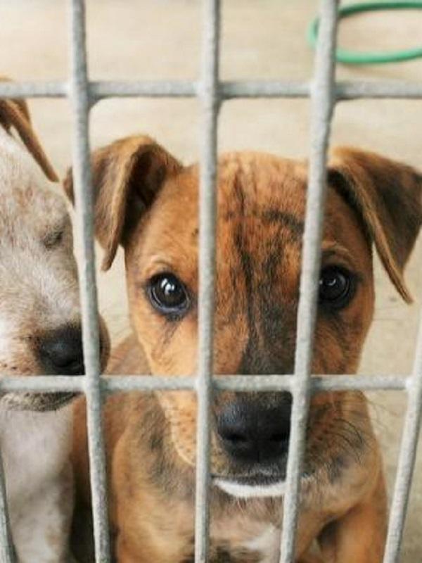 Baleares. Son Reus hace un llamamiento a los ciudadanos para que conozcan a los cerca de 150 animales en espera de adopción