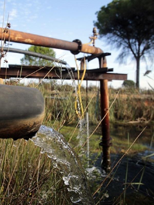 Agresión por parte de agricultores ilegales de Doñana