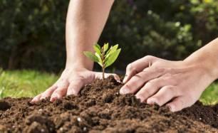 Siete plantas medicinales que puedes cultivar en casa