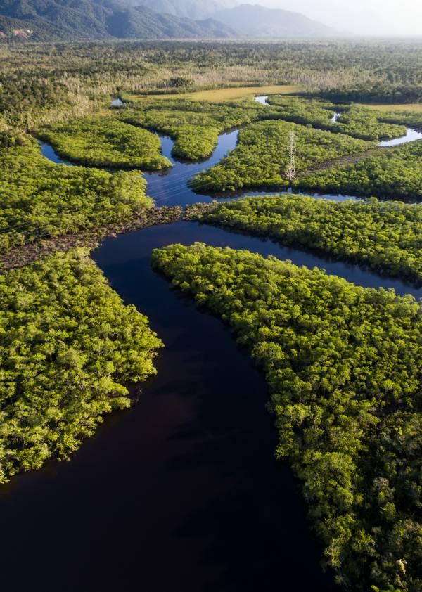 La Amazonia 'atiborrada' de plomo
