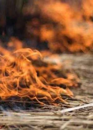 2019, un año con incendios devastadores