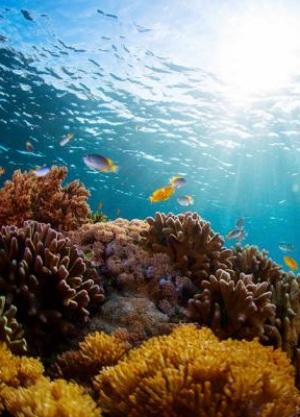 Los cristales del esqueleto de coral registran la acidificación de los océanos