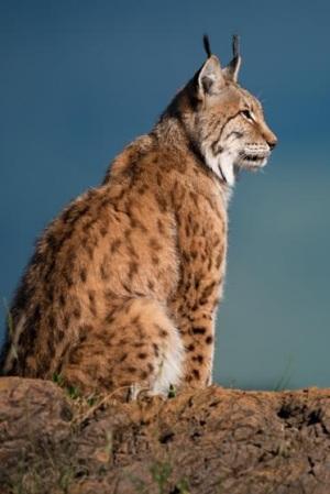 Descubren un patrón universal que explica la longevidad de las especies