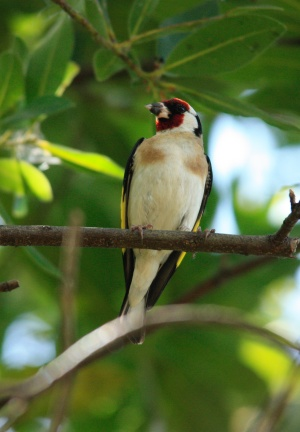 La gestión del verde urbano permite incrementar la presencia de pájaros en las ciudades