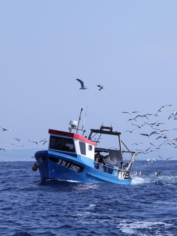 Denunciados 15 países por no proteger las ballenas y los delfines