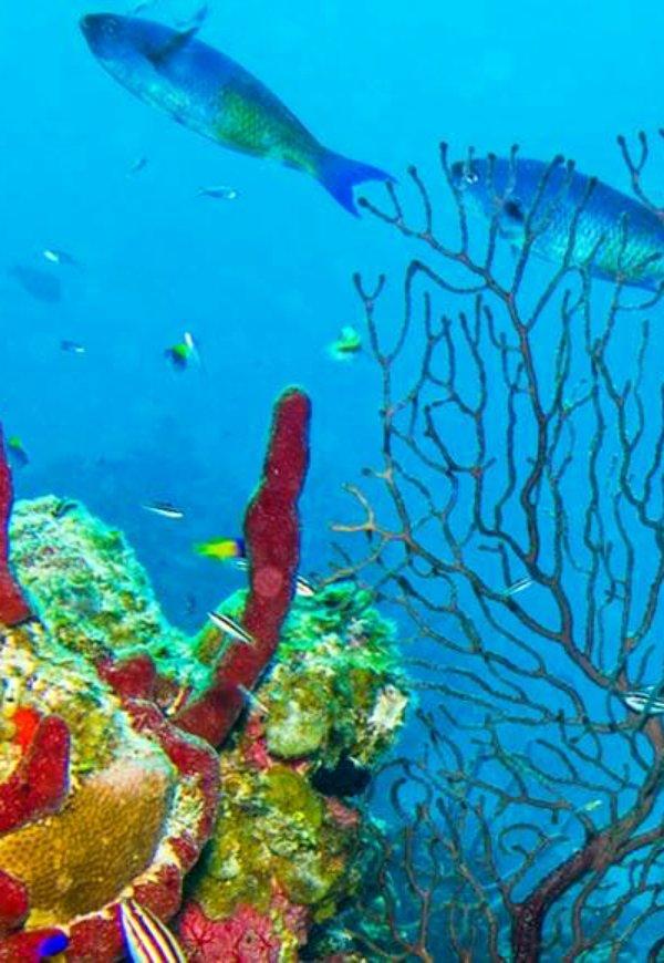 Esto es lo que verdaderamente mata los arrecifes de coral