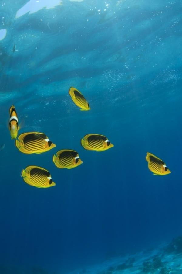 Tecnología verde para estudiar el impacto ambiental en los océanos