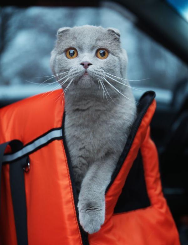 ¿Planeas viajar con tu mascota? Esto es lo que debes tener en cuenta