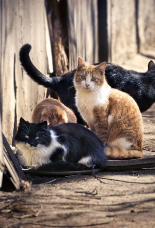 ¿Sabes cuántos animales fueron abandonados en España el año pasado?