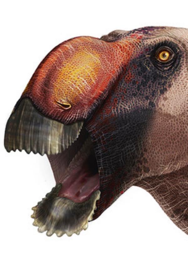 Hallan una nueva especie de dinosaurio, el 'pico de pato'