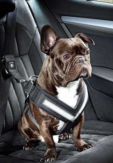 Viajar en coche con perro: consejos y normativa