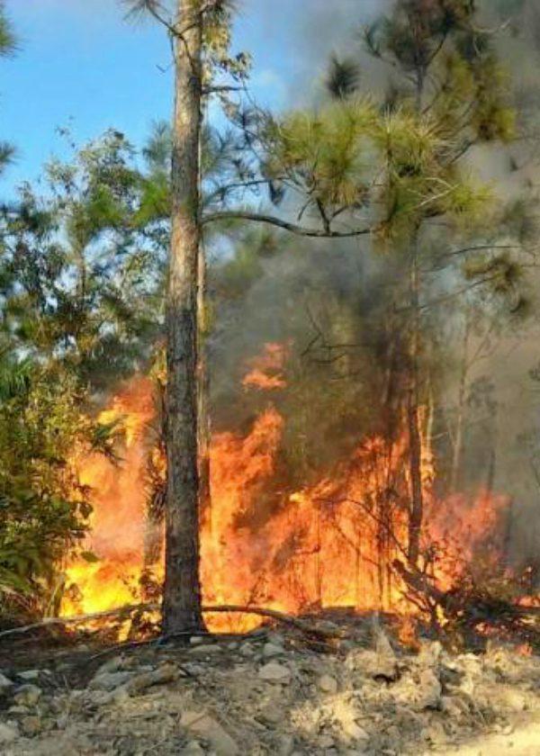 Ya son casi 50.000 hectáreas, las quemadas en 2019