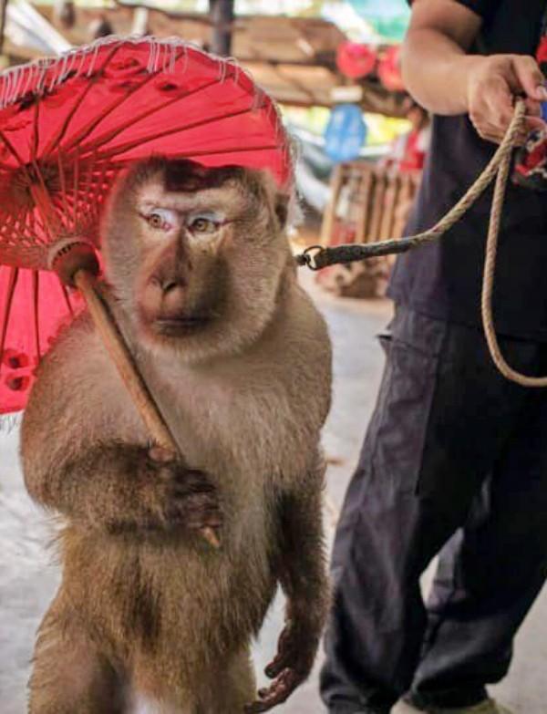 El turismo pone contra las cuerdas a los animales salvajes