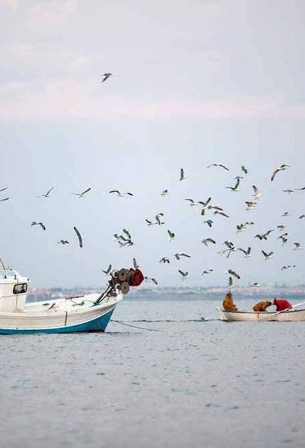 Tecnología verde para comprobar la sostenibilidad de las pesquerías