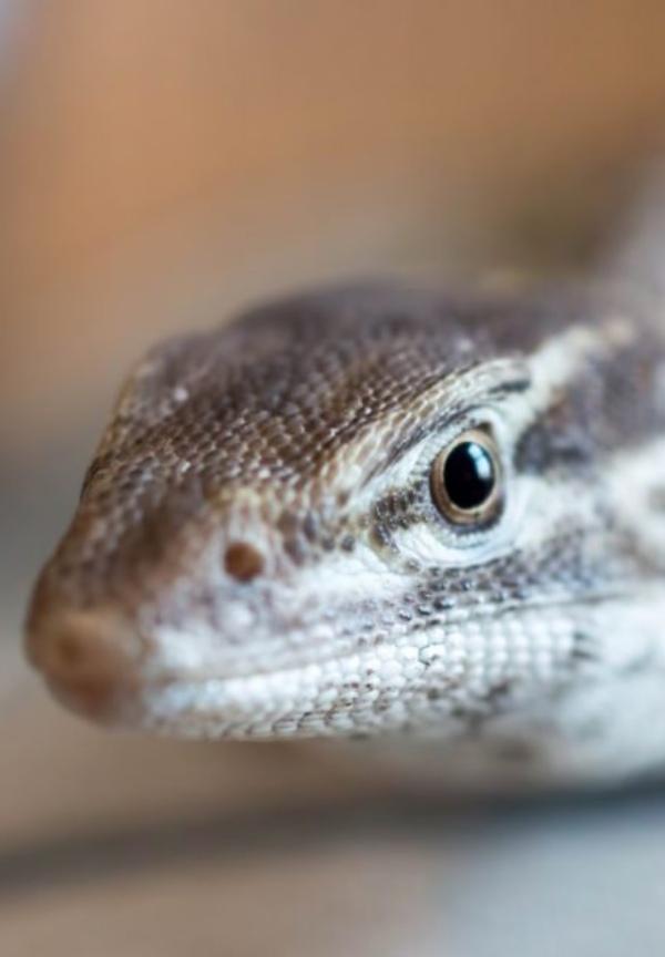Autorización de ejemplares exóticos como mascota o animal de compañía en México