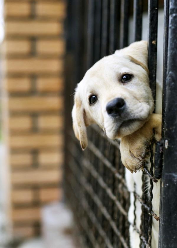 Madrid anima a sus ciudadanos a adoptar animales abandonados