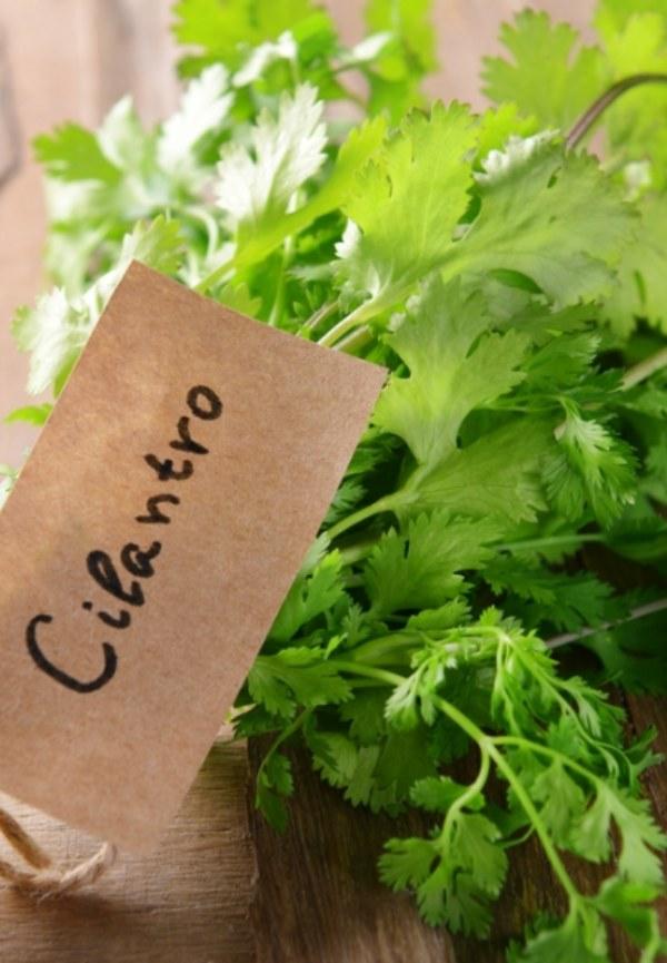 Los milagros del cilantro